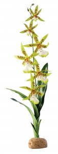 Roślina sztuczna – Orchidea Spider Orchid (EX-9913)